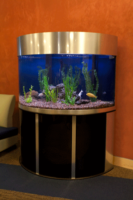 Intercept 144 Gallons 1/2 Circle aquarium sales