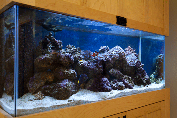 Clinic office Decor with custom commercial aquarium
