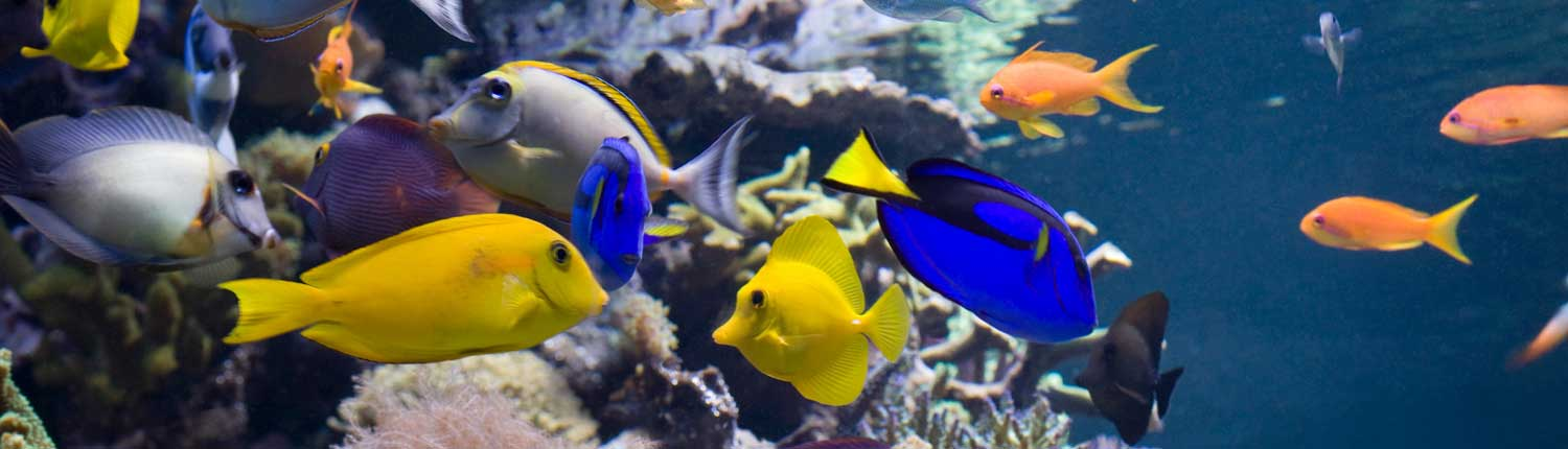 Aquarium services provide a colorful saltwater tank without work