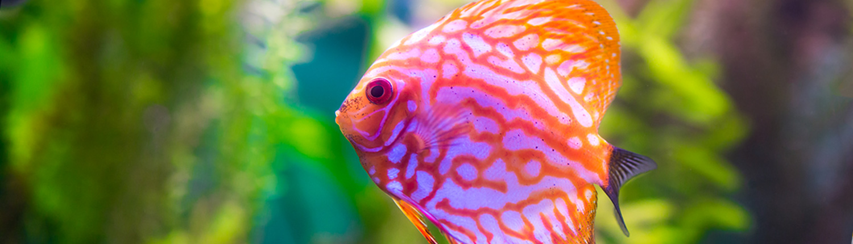 Hassle Free | Aquarium Maintenance | Customized | Leasing